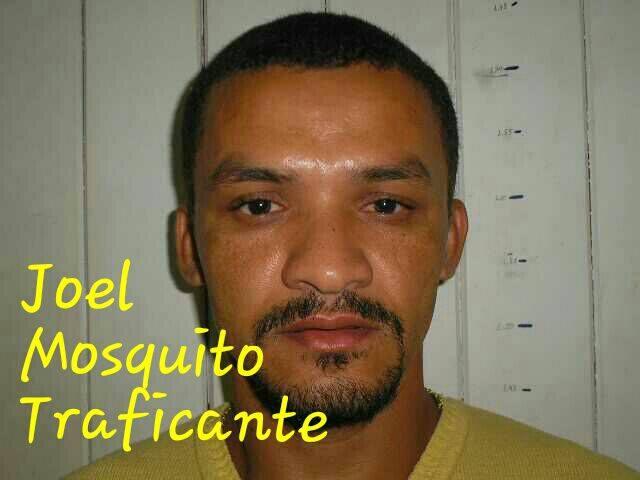 joel_mosquito